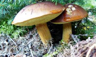 В Воронежской области от отравления грибами умерли 12 человек