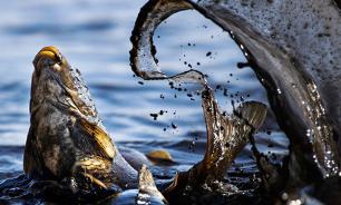 Ярославцев обеспечат качественной рыбной продукцией