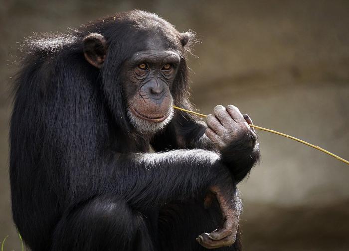 В Китае обнаружили окаменелости обезьян возрастом 6,4 млн лет