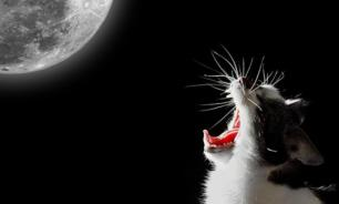 Разбираемся: Почему кот кричит по ночам