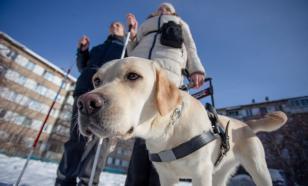 В Британии разработали прибор, который заменит собаку-поводыря