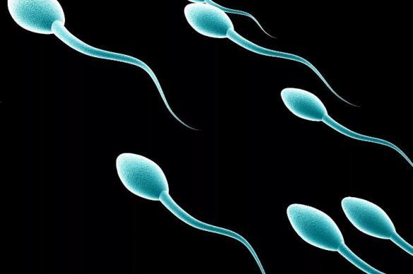 Услуги банка спермы – игра в лотерею