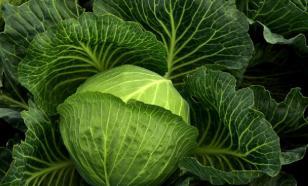Диетолог посоветовала россиянам есть во время карантина больше капусты