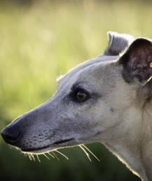 Стресс у собак: симптомы, которые мы не замечаем