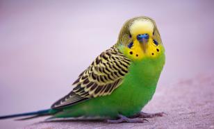 Десять вещей, которые нужно знать, прежде чем заводить птицу. Часть 1