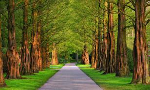 Жители Карелии смогут гулять по паркам и скверам