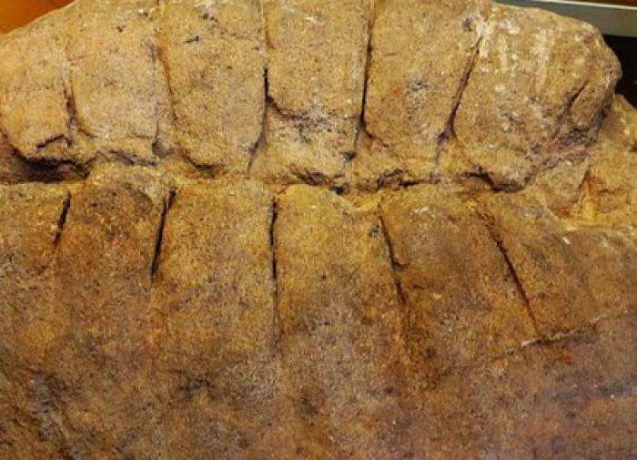На Ставрополье нашли останки черепахи, которым уже более 8 млн лет