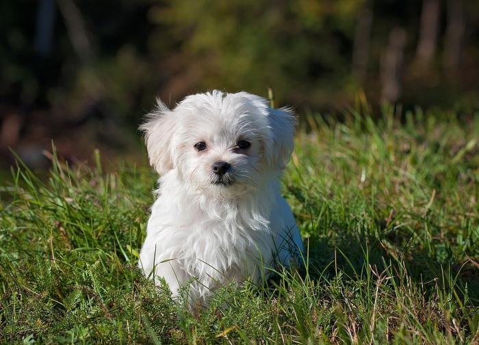 Новое исследование учёных перевернуло представление о собаках