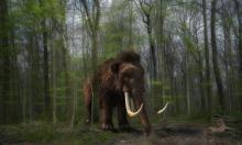 Учёные из США собираются воскресить мамонтов