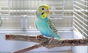 Руководство по обучению попугаев для начинающих. Часть 1