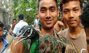 Индийцы насмерть замучали павлина ради селфи