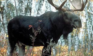 В Хабаровском крае обнаружили древний наскальный рисунок лося