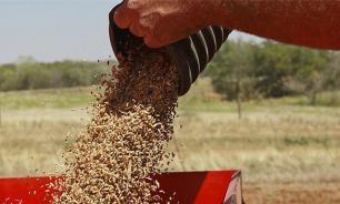 Мнение: Отказ от ГМО - возвращение в каменный век