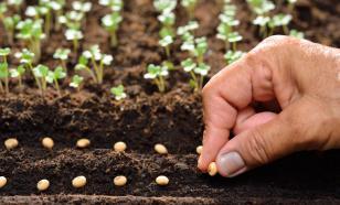 Семена для посадки: главное - свежесть?