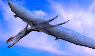 """Динозавров истребил человек? """"Птиц ужаса"""" - точно он"""
