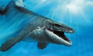 Эксперт рассказал о хищных плавающих динозаврах