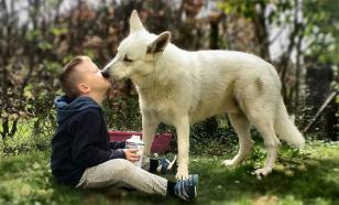 Ученые рассказали, как собаки защищают детей от болезней