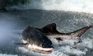 В Китае из-за гибели рыбы остановили строительство моста