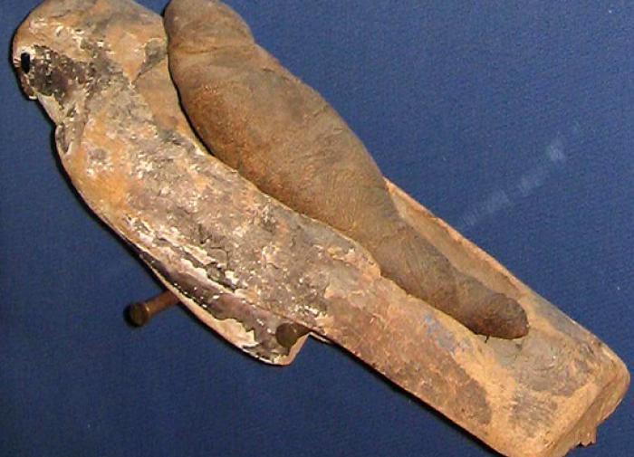 Учёные выяснили, как мумии птиц попали в древнеегипетские гробницы