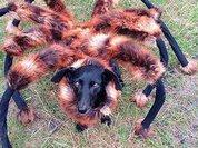 """Гигантская """"собака-паук"""" стала главным кошмаром YouTube. ВИДЕО"""