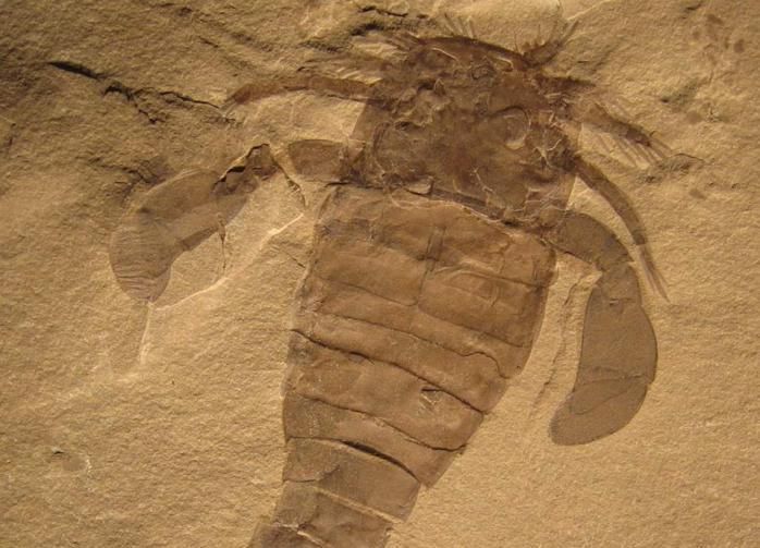 В палеозойскую эру в Австралии обитали гигантские скорпионы