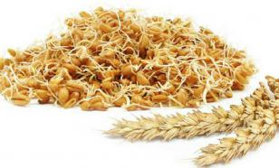 Пшеничное питание