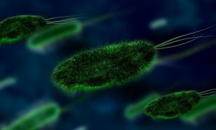 Грозит ли миру вспышка новой пандемии из-за вируса Нипах?