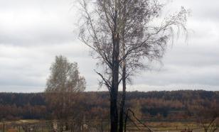 Недобросовестных лесопользователей ударят по карману