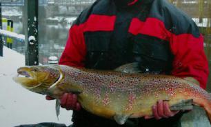 Российская рыбная отрасль восполнит объемы уходящих турецких компаний