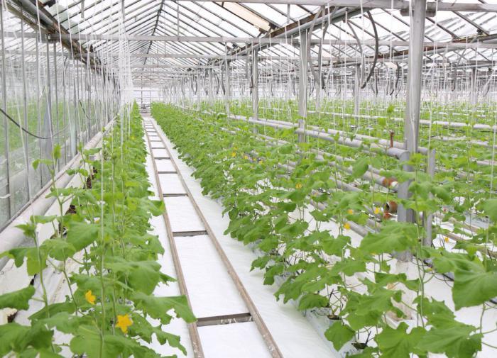 В России разработали способ ускорить рост тепличных растений