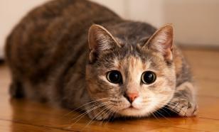 Почему кошка гадит в доме