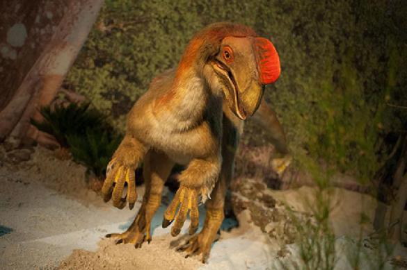 Динозавры никогда не сидели на яйцах, они их прятали по бокам