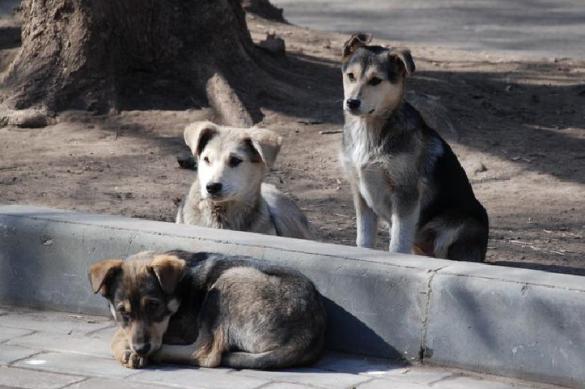 Депутат Бурматов: налог на собак увеличит число бродячих животных