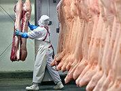 Марина Петрухина: Из Польши часто идет перезамороженное несколько раз мясо