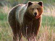 В РФ медведи любят борщ, в США - птичий корм