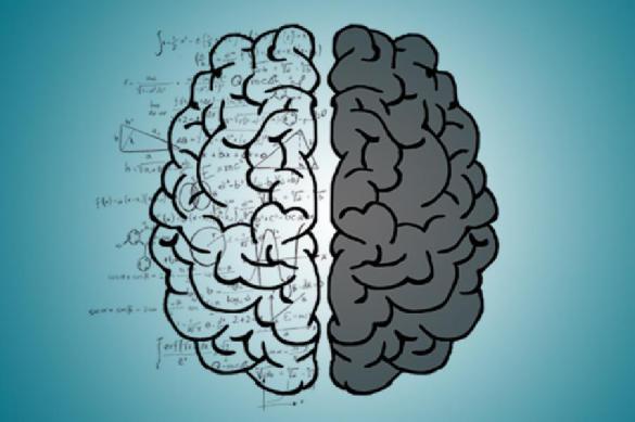 """Ученые: физические нагрузки позволят """"омолодить"""" мозг на десять лет"""