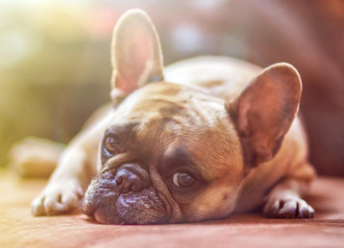 Собака бывает кусачей только от жизни собачьей - от чего страдают домашние питомцы