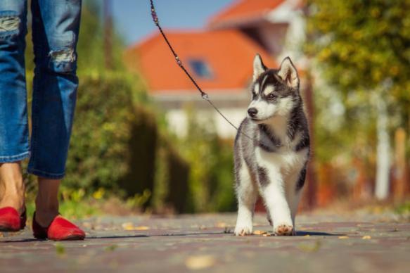 Ветеринары: сколько нужно гулять с собакой для профилактики ожирения