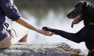 Не обманывайтесь: животные любить не умеют
