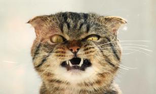 Какая кошка перебежала дорогу египтянам