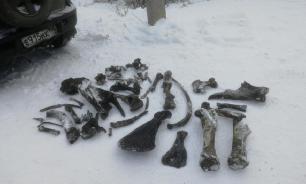 В реке Тобол нашли уникальные останки доисторических существ