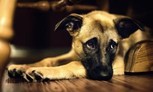 В Крыму у девушки с ДЦП отбирают щенка недовольные соседи