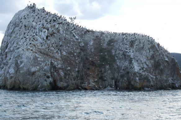 Лесозащитники обвинили бакланов в гибели сибирских лесов