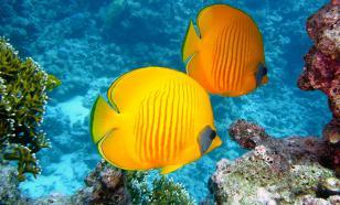 Плавники рыб могут ощупывать пространство, как человеческие пальцы