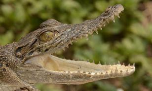 В качестве мести жители Индонезии убили три сотни крокодилов
