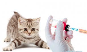 Какие прививки нужны котенку?
