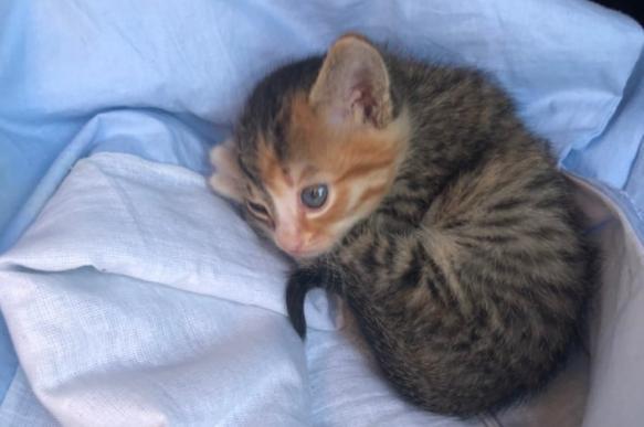 Новосибирский таксист спас котенка и сделал его своим напарником