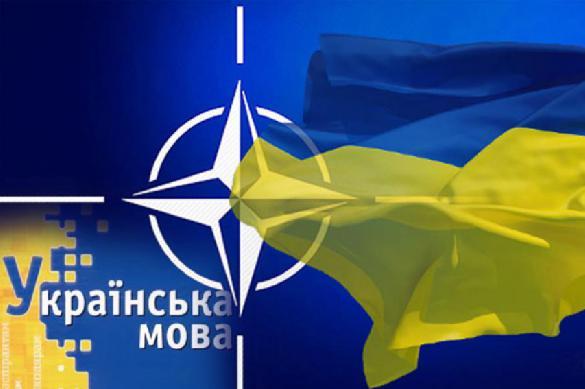 НАТО не до Украины - быть бы живу