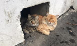 Службы ЖКХ обязали оставлять продухи для кошек в подвалах жилых домов
