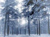 Новогодние сказки изо льда, снега, металла